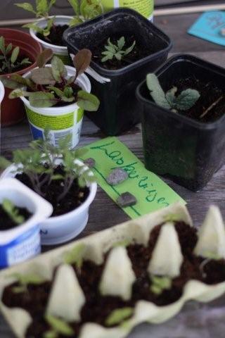 Pflanzenmarkt_Mai_2011_ 324 (2)
